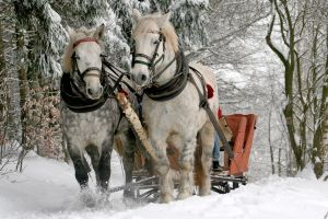 Kuligi w Szymbarku ruszyły. Mnóstwo śniegu, ponad 50 zaprzęgów, specjalna trasa czekają na chętnych