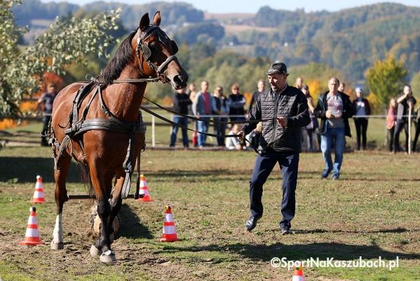kolano-stadnina-hubertus-cross-033.jpg