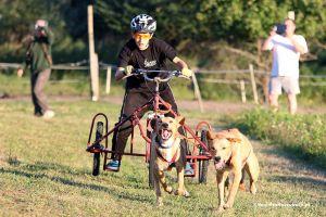 Rywalizacja psów i maszerów w Kaszubskiej Alasce